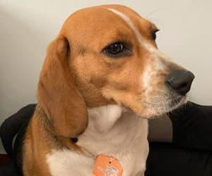 dog, id, and mascotas image
