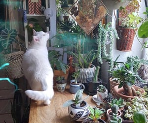 aesthetic, cat, and home image