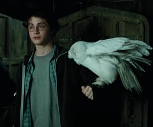harry potter, hedwig, and movie image