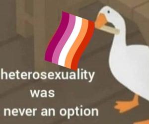 goose, meme, and lesbian image
