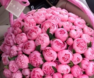flowers, peonies, and pink peonies image
