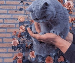 aesthetic, cat, and flower image