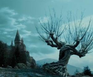 harry potter, hogwarts, and tree image