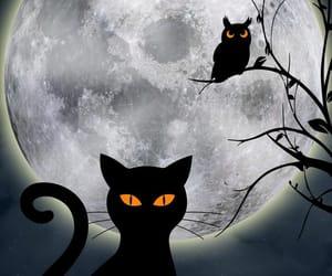 cat, dia de los muertos, and gato image