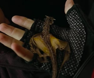 harry potter, dragon, and gif image