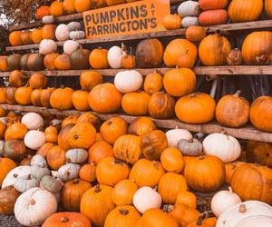 Pumpkins   @CelesteMF_1D