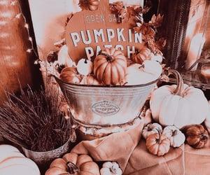 aesthetics, pumpkins, and autumn image