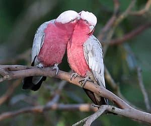 birds and gif image
