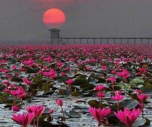 flowers, beautiful, and sunrise image