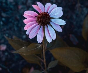 flower, scenery, and soft image