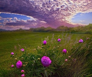 cloud, flower, and scenery image