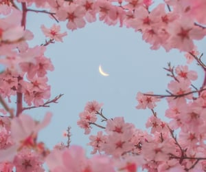 aesthetic, blossoms, and blue image