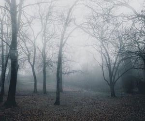cold, fall, and fog image