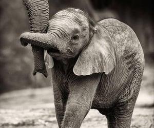 elephant, animal, and baby image