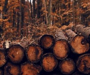 autumn, fall, and wood image
