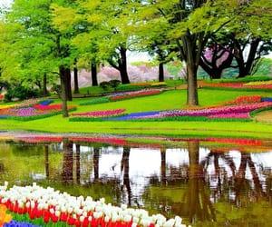 beautiful, thenetherlands, and keukenhof image