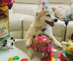 birthday, happy, and puppy image