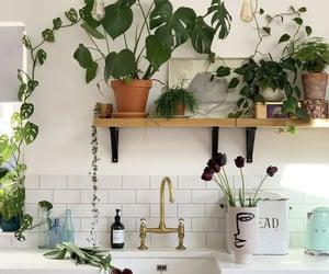 Green kitchen full of plants