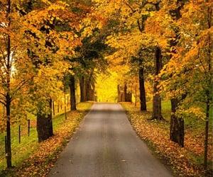 Tree avenue in fall colors. Östergötland, Sweden.