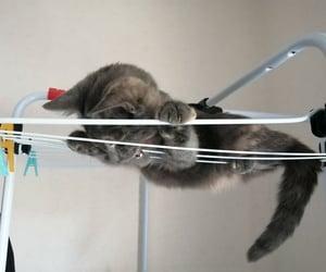 acrobat, baby cat, and cat image