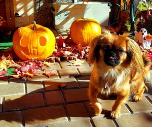 autumn, jesen, and pumpkin image