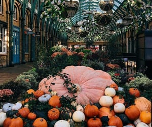 Halloween, inspiracion, and calabazas image