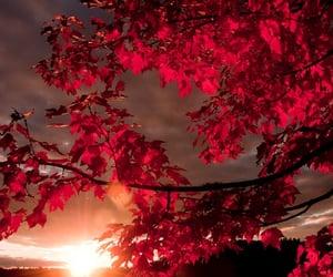 autumn, feliz, and hello november image