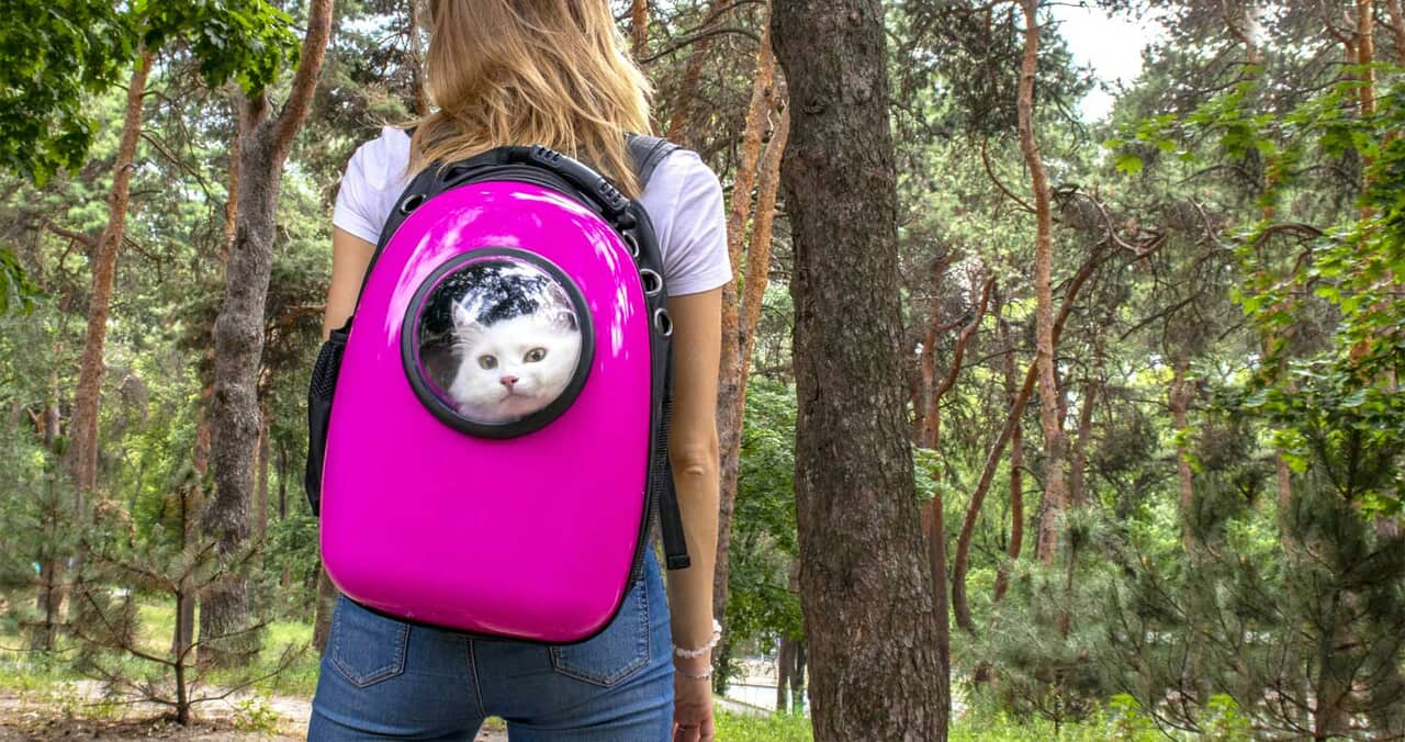 article, cat backpack, and backpack image