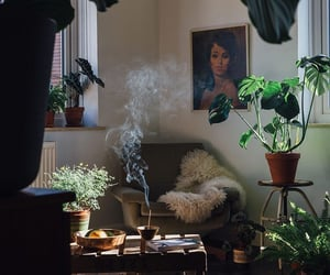 home, plants, and interior image