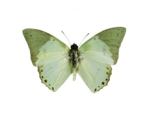 green, butterfly, and icon image