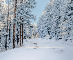 cold, snow, and winter image