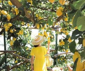 lemon, yellow, and Amalfi image
