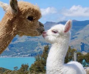 adorable, babies, and llama image