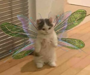 cat and fairy image