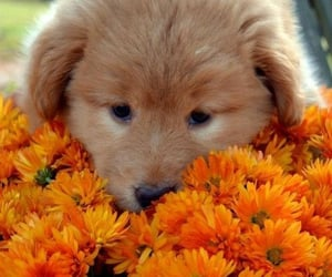 puppy, cute, and animals image