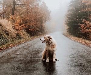 amazing, australian, and fog image