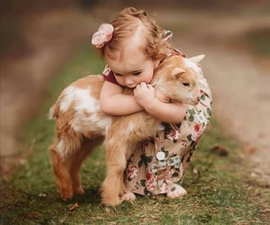 animal, goat, and baby image