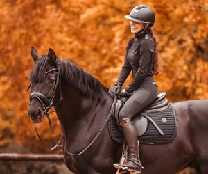 autumn, country living, and equestrian image