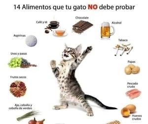 care, gato, and info image