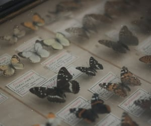 butterfly, aesthetic, and vintage image