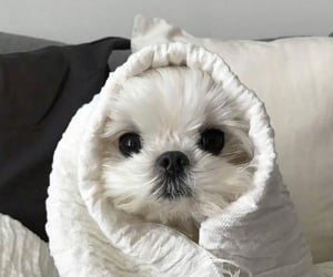 dog, animal, and doggie image