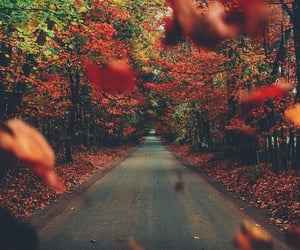 america, fall, and forest image
