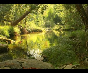 green, portugal, and water image
