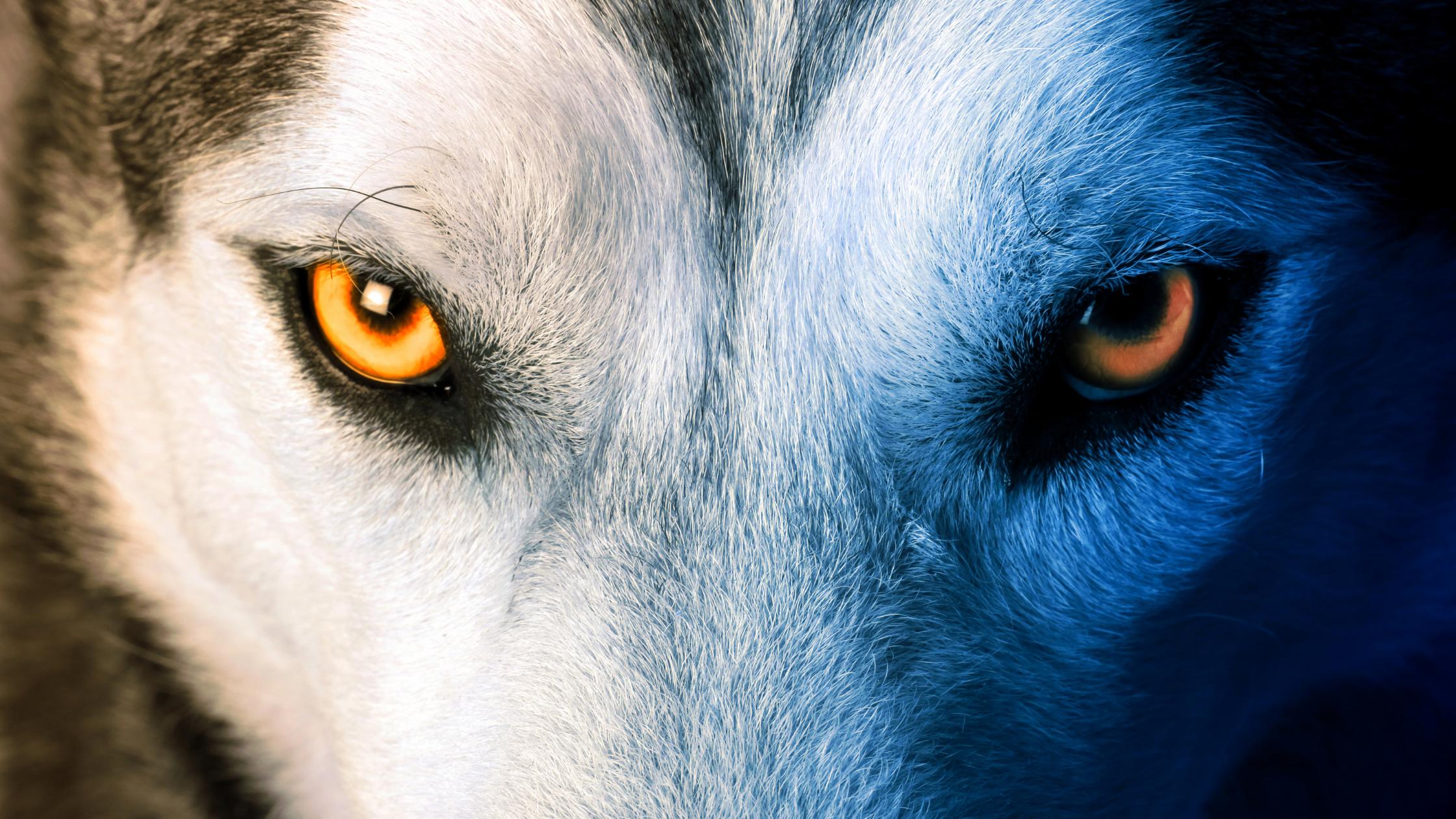 artigo, article, and wolf image