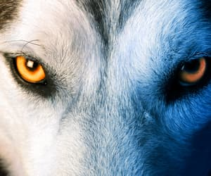 article, tema wolf wp, and wolf wp image