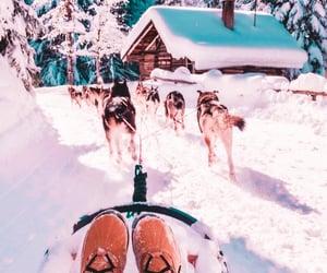 boots, husky, and sleigh image