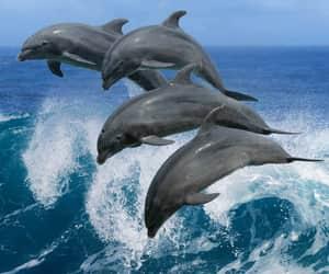nature, sea, and cruise image