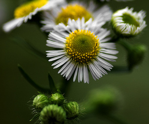 bokeh, canon, and flowers image