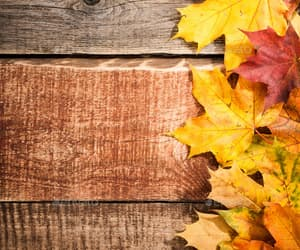 autumn, background, and yellow image