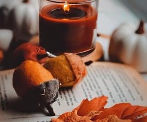 acorns, books, and fall image